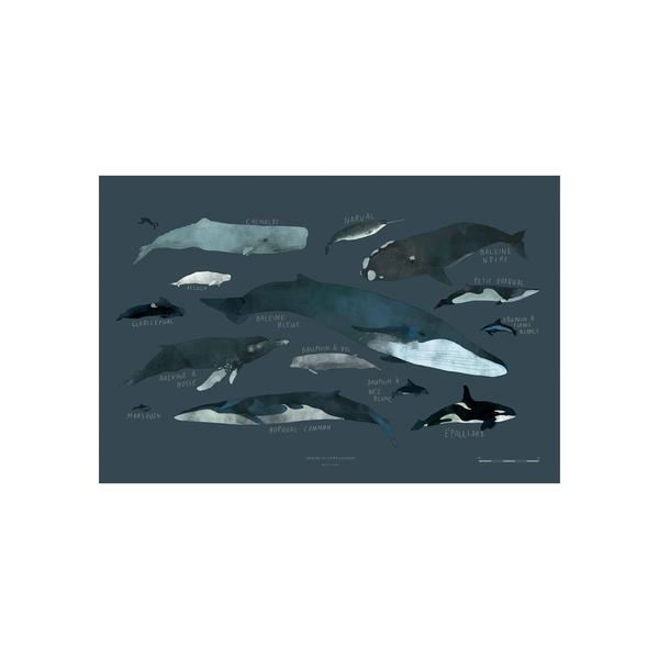 Cliquez ici pour acheter Whales chart – Print